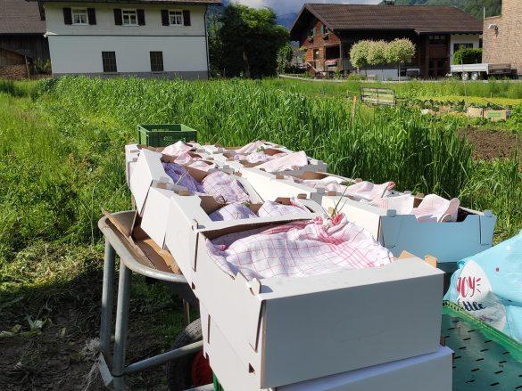 Bio-Kiste von der GASCHT…